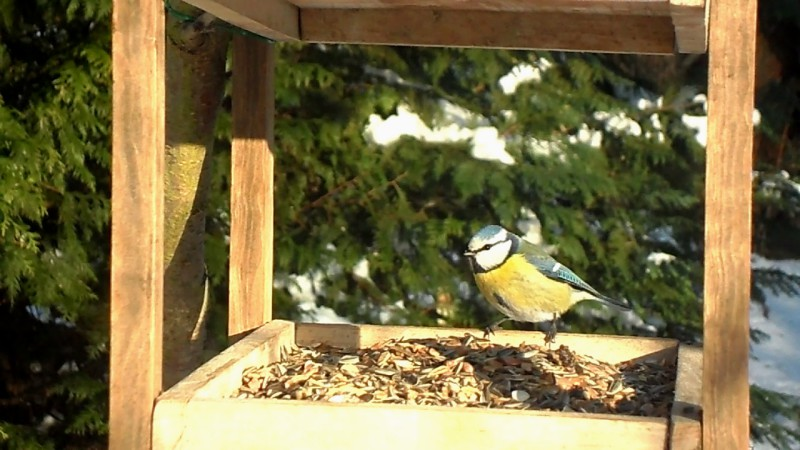 Vogelwelt im Gemeinschaftsgarten Bunte Flora